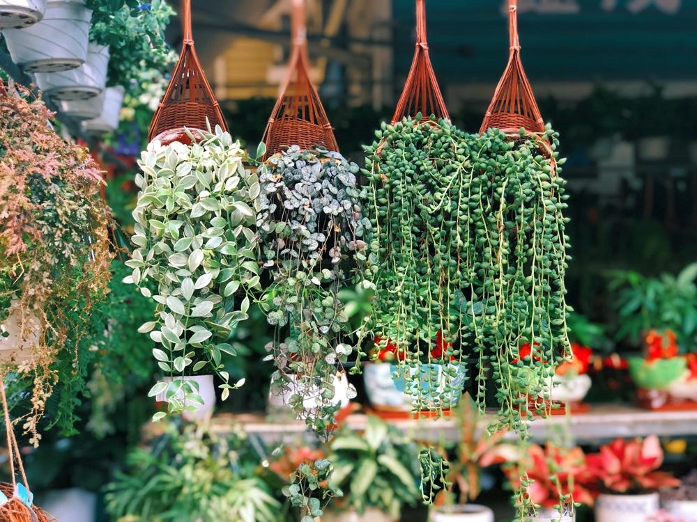 produits boutique vegetaltrend