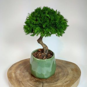 Bonsai Ming 4, vegetaltrend