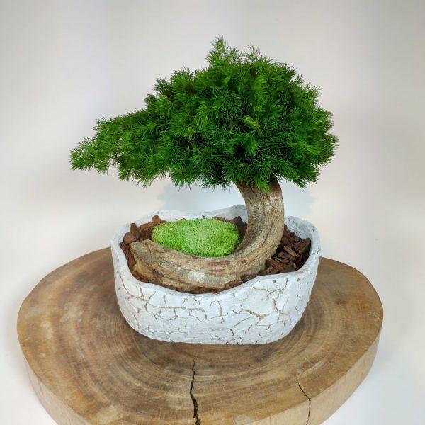 Bonsai Ming 5, vegetaltrend
