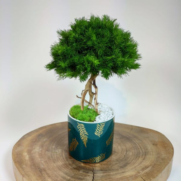 Bonsai ming 7, vegetaltrend