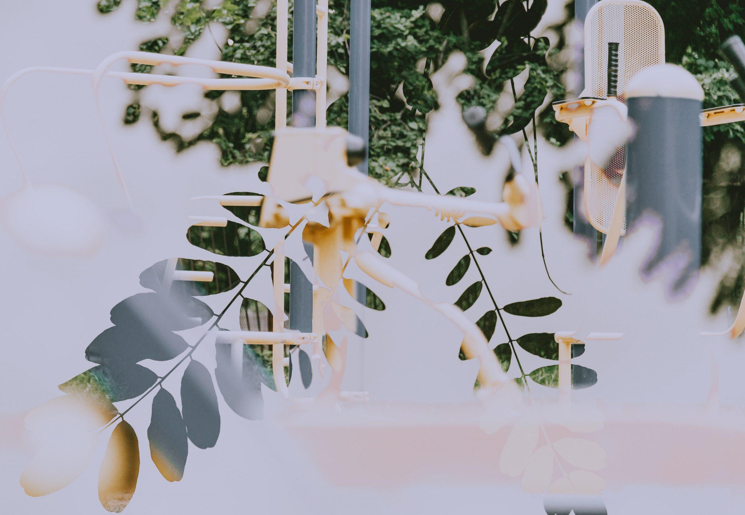 feuilles fond d'ecran