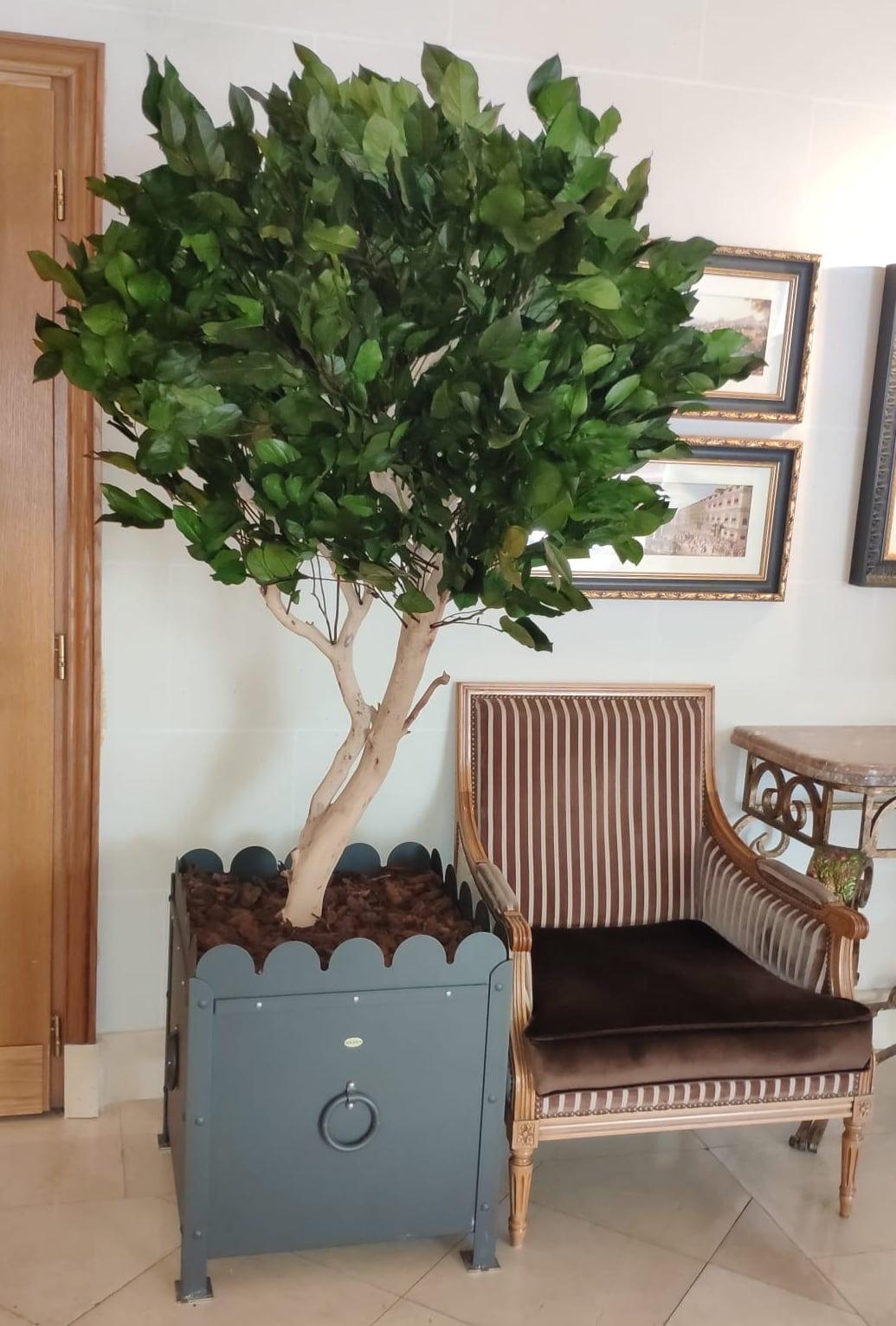 arbre salal, vegetaltrend