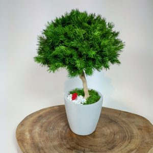 Bonsai ming 10, vegetaltrend