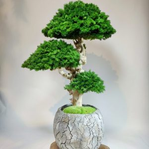 Bonsai ming 9, vegetaltrend