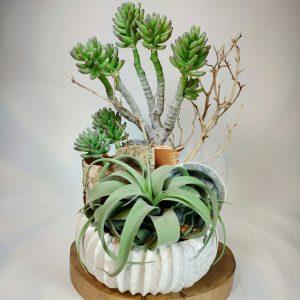 Bouquet plante grasse1, vegetaltrend