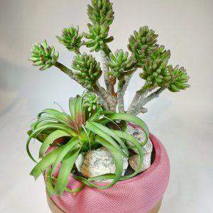 Bouquet plante grasse2, vegetaltrend