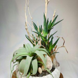 Bouquet plante grasse 3, vegetaltrend
