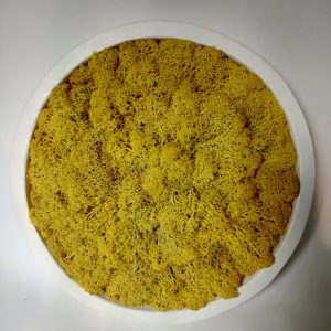 cadre vegetal jaune, vegetaltrend