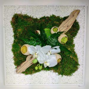 Cadre vegetal orchidee, vegetaltrend