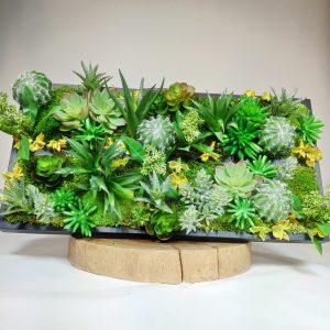 Cadre vegetal plante grasse, vegetaltrend