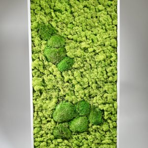Cadre végétal mousse islande, vegetaltrend