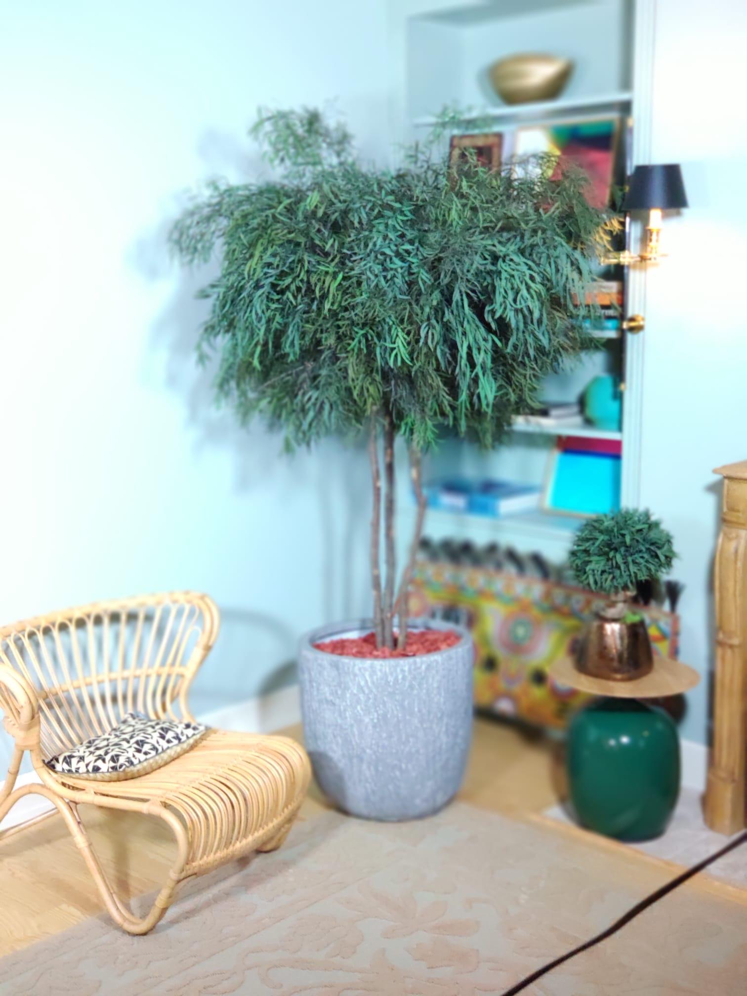 Nicoly, vegetaltrend
