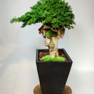 Plante en pot ming, vegetaltrend