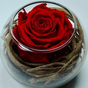 Rose stabilisée rose rouge